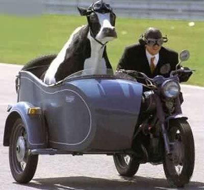 Funny-Motorbike-Animals-And-Speed-7